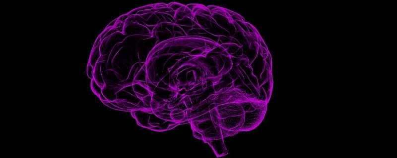 Mit BrainRotation zu neuen Blickwinkeln für das Gehirn - Illustration eines Röntgenbildes vom Gehirn