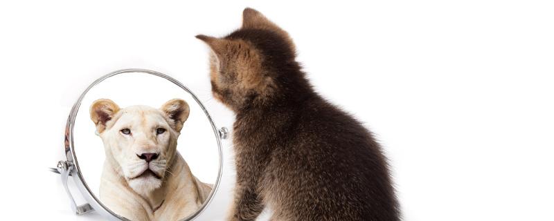 Katze vor einem Spiegel mit dem Bildnis einer Löwin