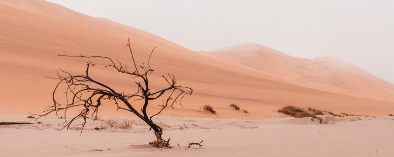 Für ein lebendiges und langfristiges Miteinander hilft eine gute Kommunikation - Toter Baum in der Wüste